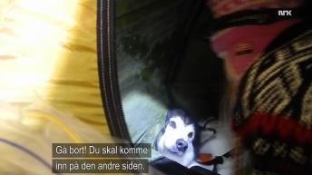 Hund telt