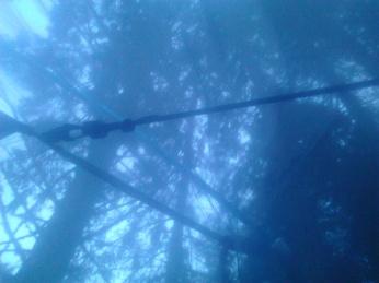 Telt i trollskogen (10)
