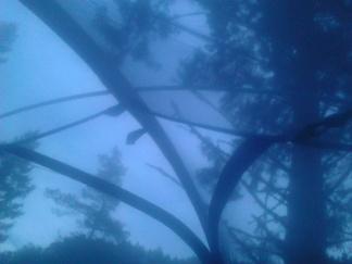 Telt i trollskogen (12)