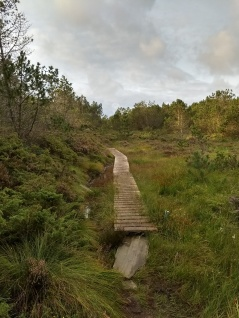 Første tur til Hellesøy (7)