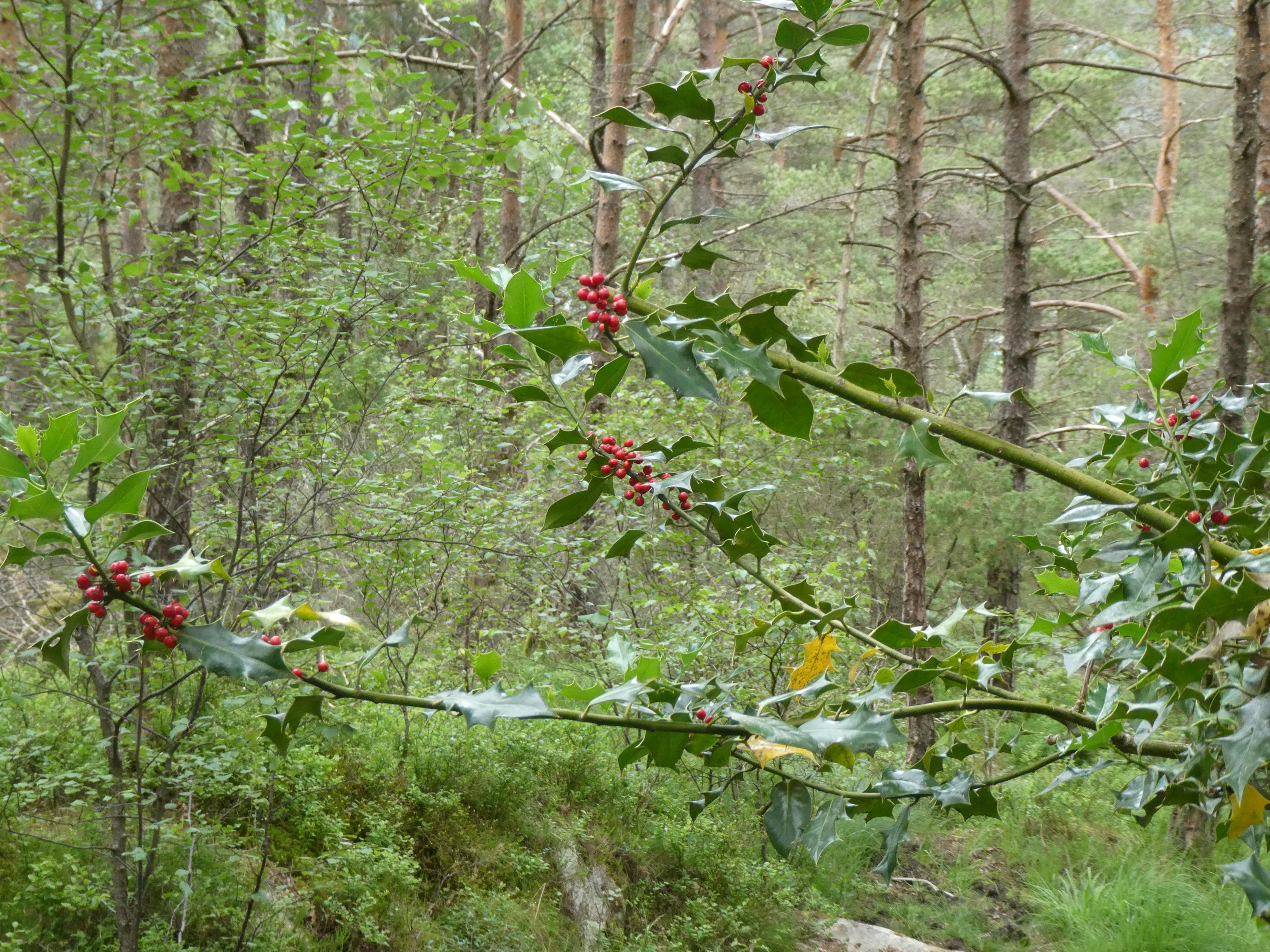 Fanafjell DZ90 (12)