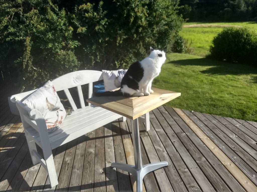 Katten Mio sitter i solen på et lite bord på terrassen og speider utover jordet. Bak bordet står en benk med to pynteputer.